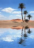 Palm trees near the lake in the Sahara Desert, Morocco