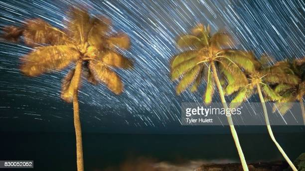 Palm Trees Night Sky Star Trails Over Oregon