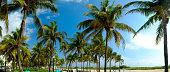 Palm trees, Ocean Drive, South Beech, Miami