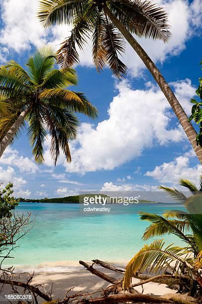 Palmiers sur la plage dans les îles Vierges