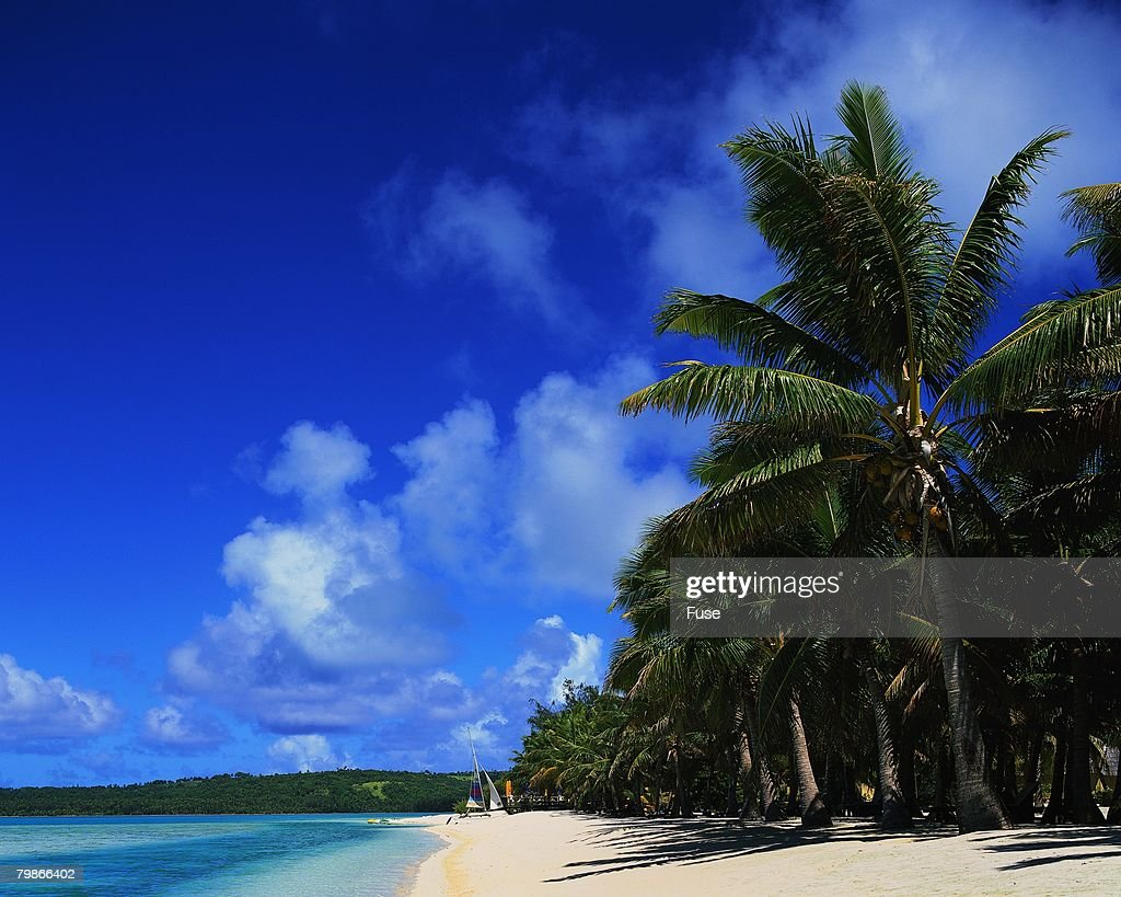 Palm Trees on a Polynesian Beach : Stock Photo