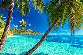 Palm trees on a tropical beach with a blue sea on Moorea, Tahiti island
