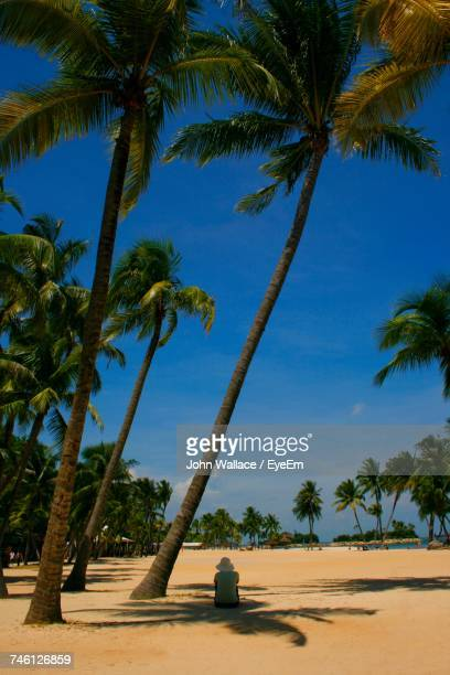 Palm Trees On Beach Against Blue Sky