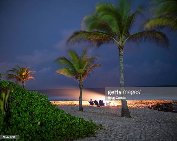 Palm trees on beach against sky at dusk