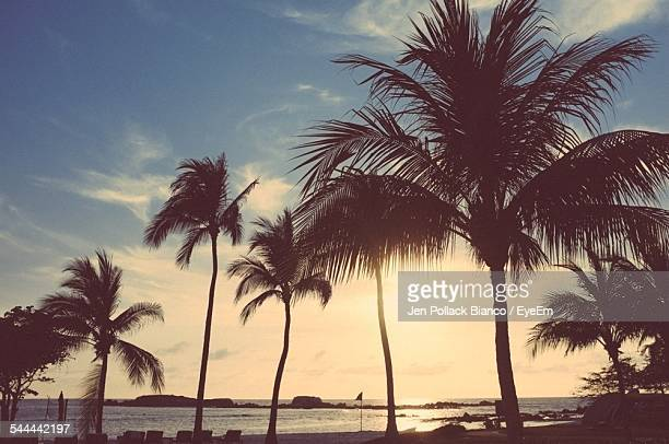 Palm Trees On Beach Against Sky