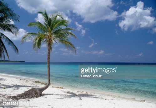Palm trees on beach, Cuba : Stock Photo