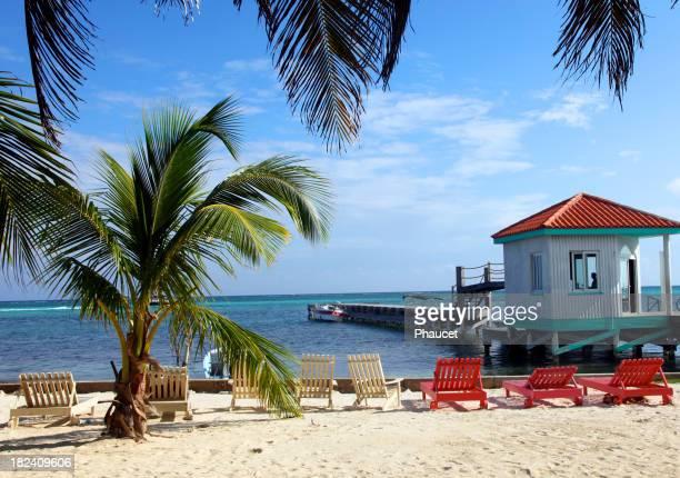 Palmiers sur la plage de Belize