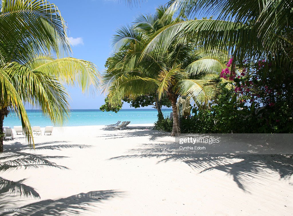 Palm trees on beach in Negril, Jamaica