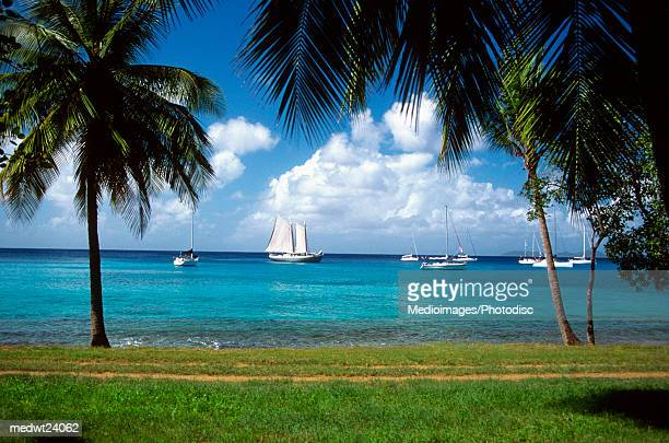 Palm trees on beach with sailboats in the distance off Mustique Island, Grenadines, Caribbean