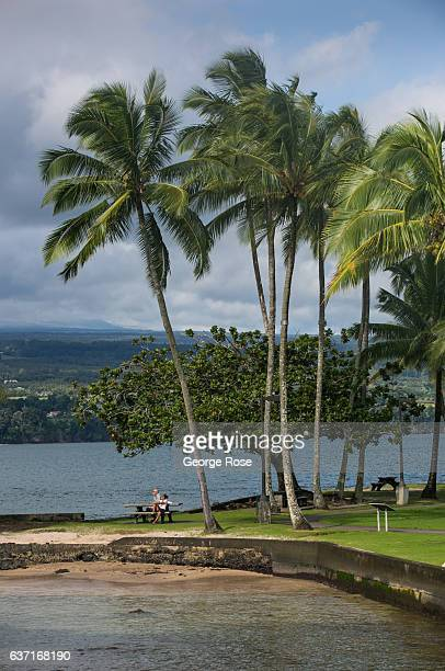 Palm trees on Coconut Island are viewed on December 12 in Hilo Hawaii Hawaii the largest of all the Hawaiian Islands at 4000 square miles and growing...