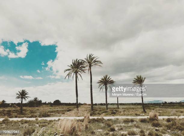 Palm Trees On Field Against Cloudy Sky