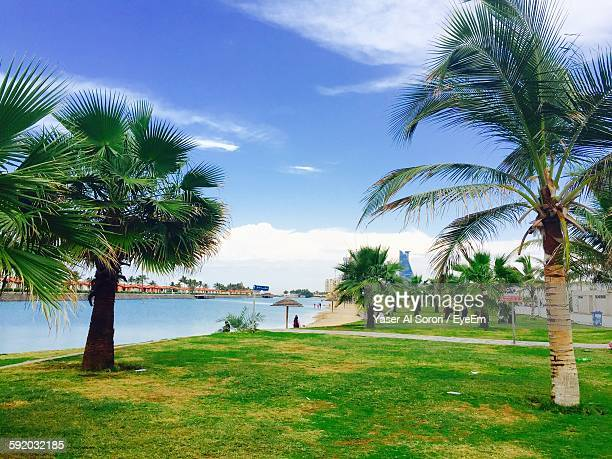 Palm Trees On Grass By Sea Against Sky
