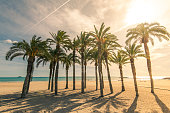 Palm trees on sandy beach with sunlight, tropical paradise