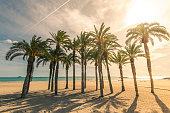 Palm trees on sandy beach with sunlight, tropical paradise