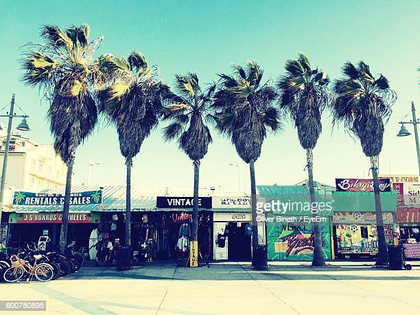 Palm Trees On Sidewalk By Market Stalls At Marina Del Rey