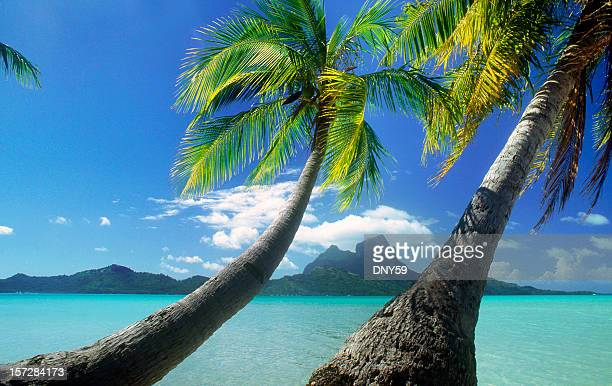 Palm trees on Tahitian Isles