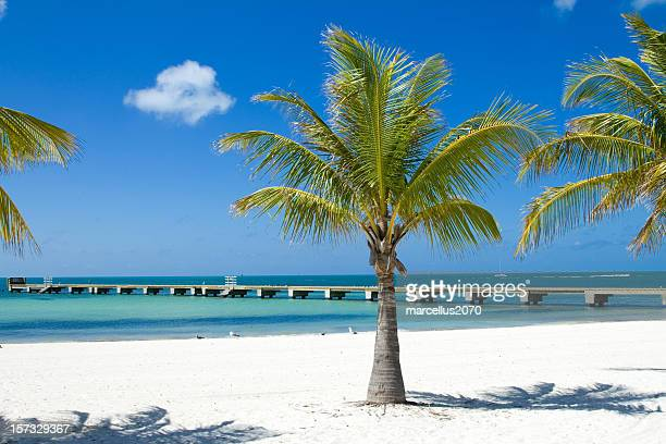 Palm trees on the beach and a long pier