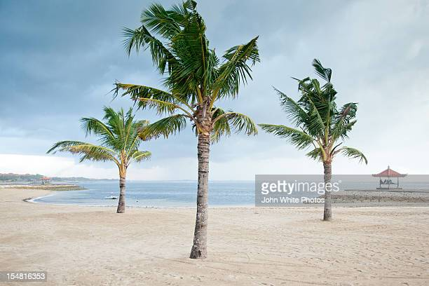 Palm trees on the beach. Nusa Dua. Bali. Indonesia