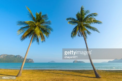 Palm trees on the beach : Stockfoto