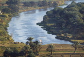 Palm trees on the Nile river Minieh region Egypt