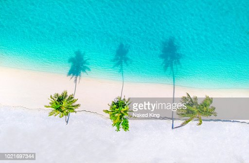 Palm trees on the sandy beach and turquoise ocean from above : Stock Photo