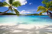 palm trees at a tropical beach in the Virgin Islands