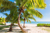 Palm trees on tropical beach with Tropical Climate,  Caribbean