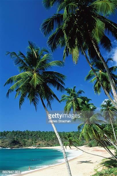 Palm trees on tropical beach, woman at water's edge, Sri Lanka