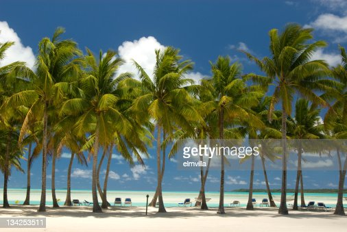 Palm Trees on white sandy beach in the South Pacific