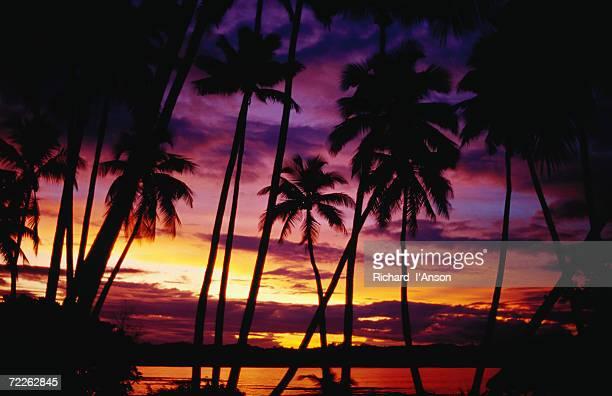 Palm trees on Yanuca Island on the Coral Coast silhouetted at sunset, Fiji