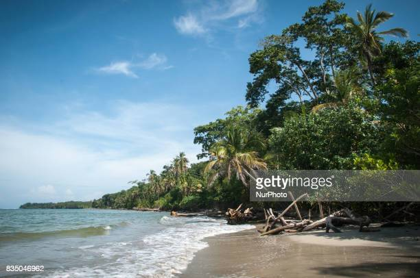 Palm trees over a Caribbean beach in Cahuita National Park Costa Rica on 17 November 2011