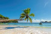 Coconut Palm trees on the sandy beach and beautiful sea.