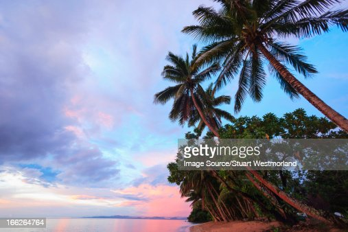 Palm trees overlooking tropical beach