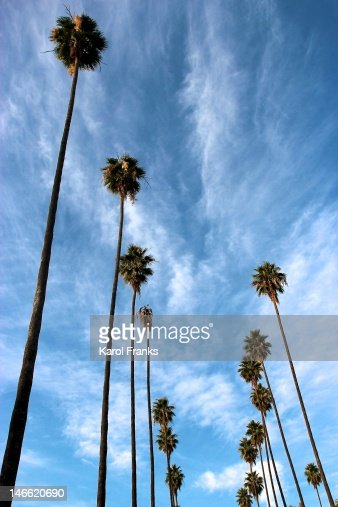 Palm trees : Stock Photo