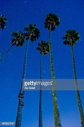 palm trees reaching to starry sky : Stock Photo