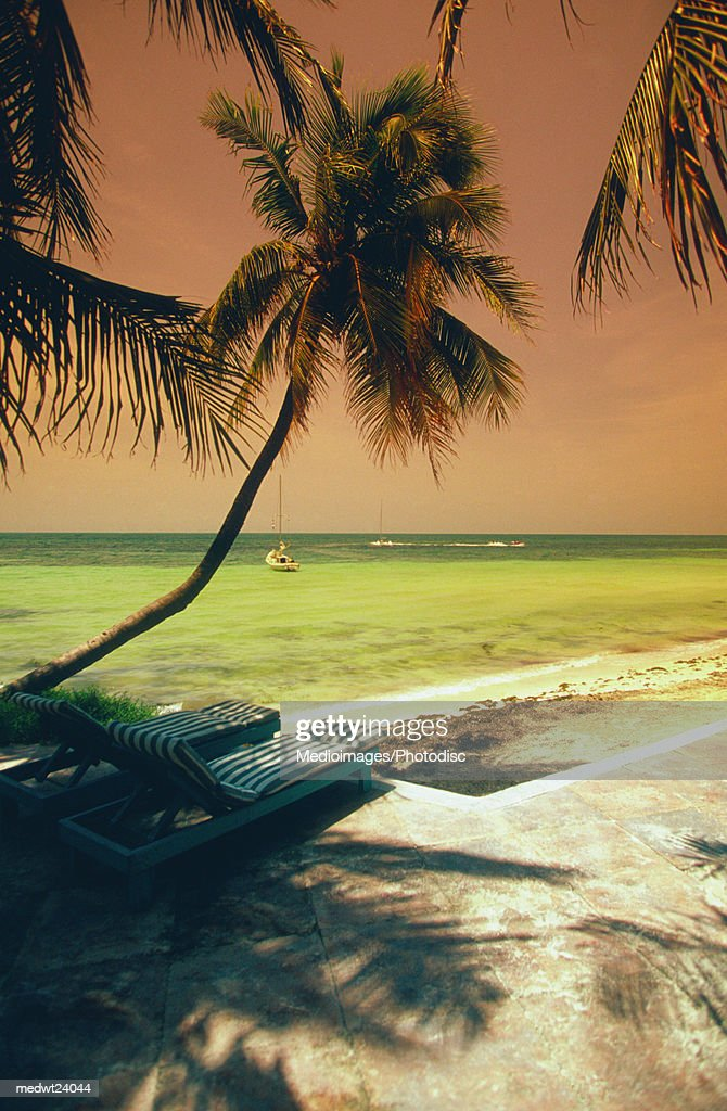 Palm trees, shadows and sailboat at sunset on George Smathers Beach, Key West, Florida, USA : Stock Photo