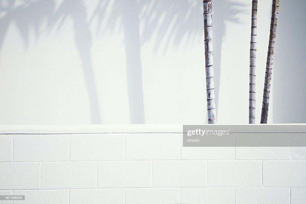 Palm trees & Shadows