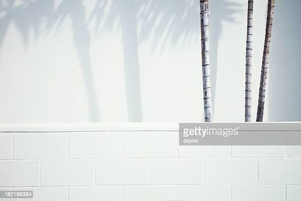 Palmen & Schatten