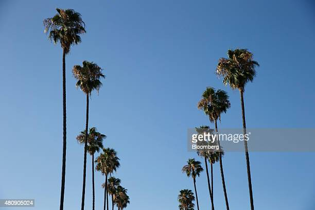 Palm trees stand on South Berendo Street in Los Angeles California US on Tuesday July 14 2015 Photographer Patrick T Fallon/Bloomberg via Getty Images