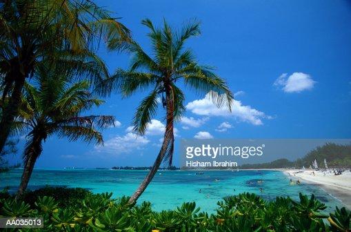 Palm Trees & Tropical Beach, Bahamas