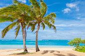 'palm trees, tropical beach, sand, sky,  pacific ocean, Kauai'