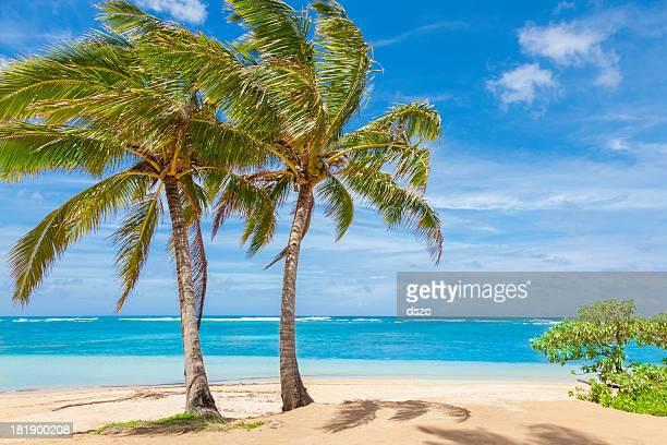 palm trees, tropical beach, sand, sky,  pacific ocean, Kauai