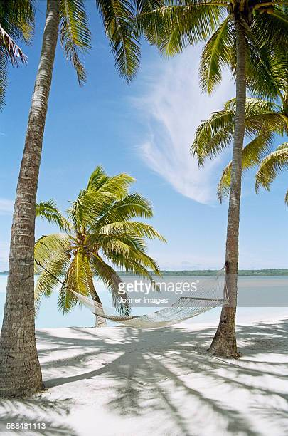 Palm trees with hammock on sandy beach