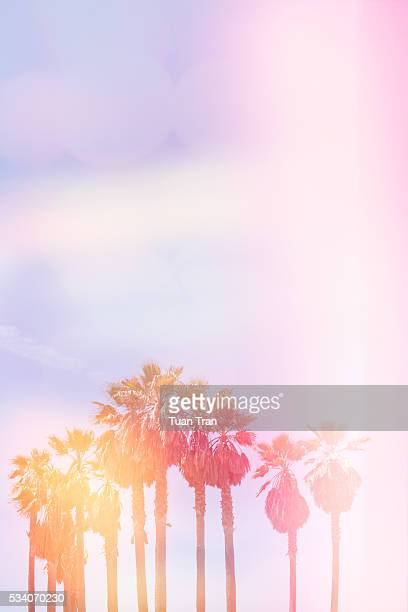 Palm trees with light leaks