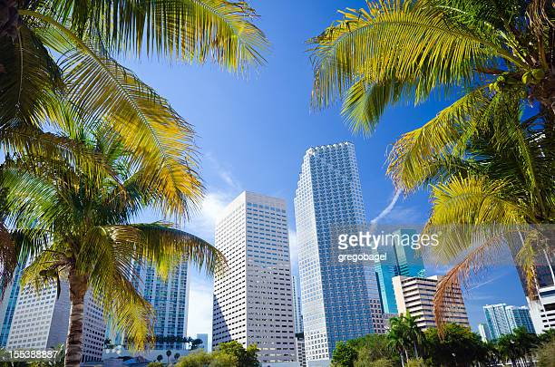 Palm trees with office buildings in Miami, FL