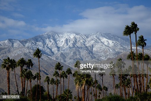 Palm trees with snow covered mountains beyond : Stock Photo