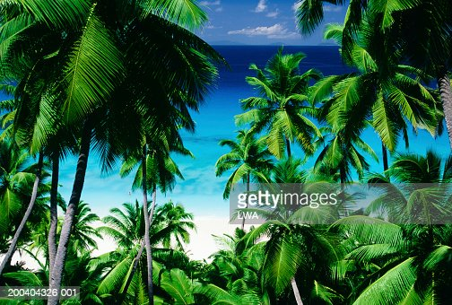 Palm trees with tropical beach in background : Stock Photo