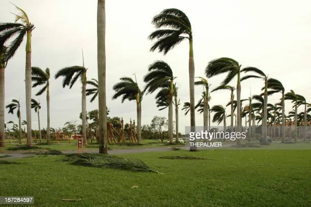 palms after storm
