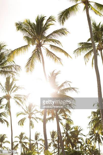 Palms against sky and sunlight