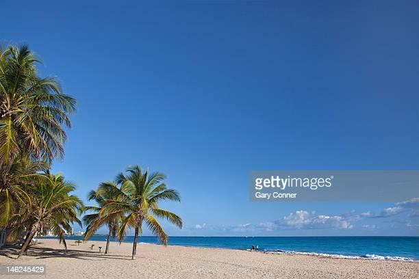 Palms and beach at San Juan